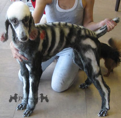 Small Dogs That Don't Shed Hair