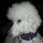 Tidbits – Pet Health