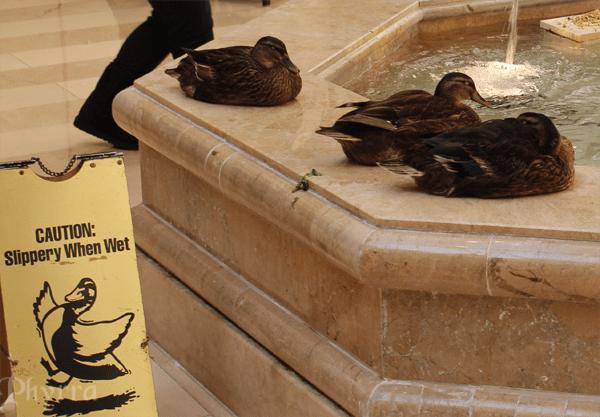 Random Ducks in the Hotel