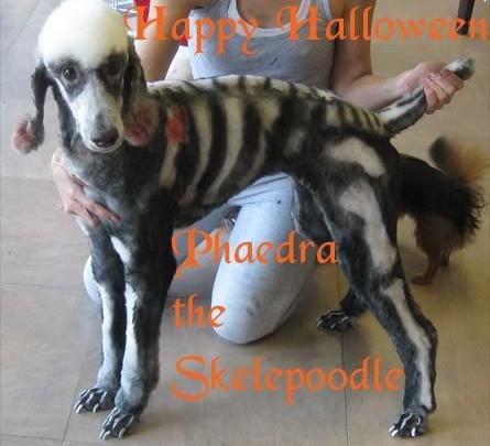 Happy Halloween! Blessed Samhain!