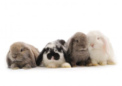 Paula's Choice Announces Its Certification in the Leaping Bunny Program