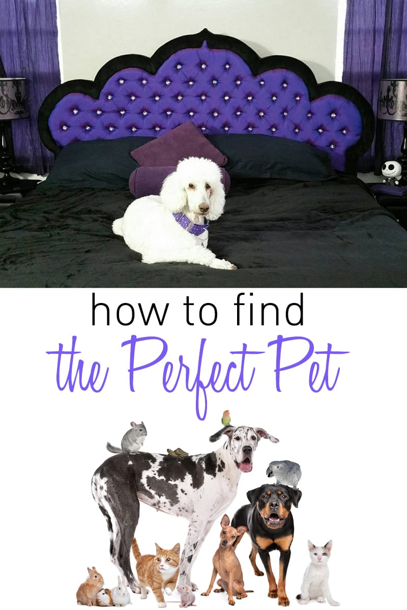 How to Find the Perfect Pet