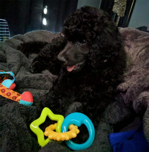 Puppy Supplies: What You Need for a New Puppy