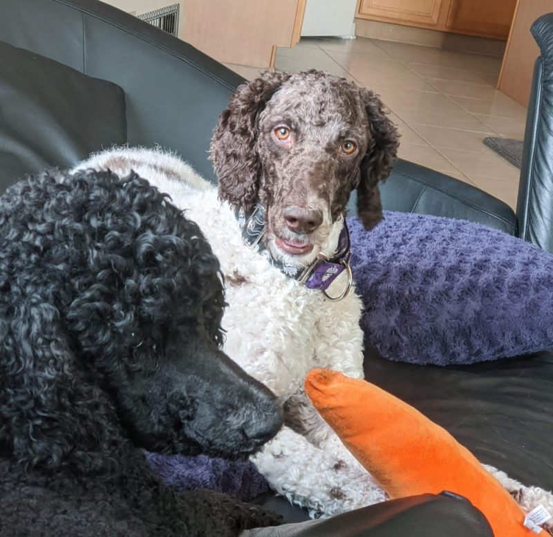 National Adopt a Shelter Pet